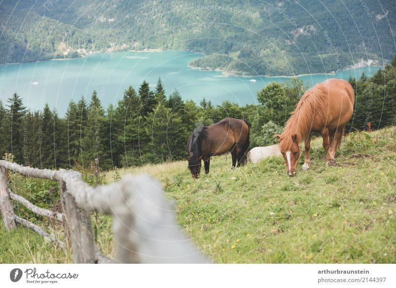 Horses graze on the mountain Leisure and hobbies Ride Vacation & Travel Tourism Trip Summer Summer vacation Mountain Hiking Climbing Mountaineering Nature