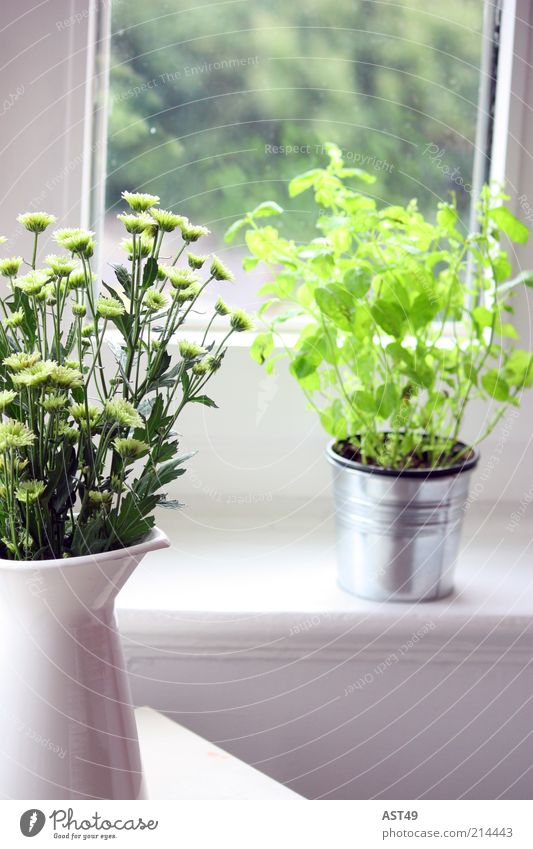 Beautiful White Flower Green Plant Summer Leaf Window Spring Warmth Room Flat (apartment) Growth Decoration Living or residing Natural