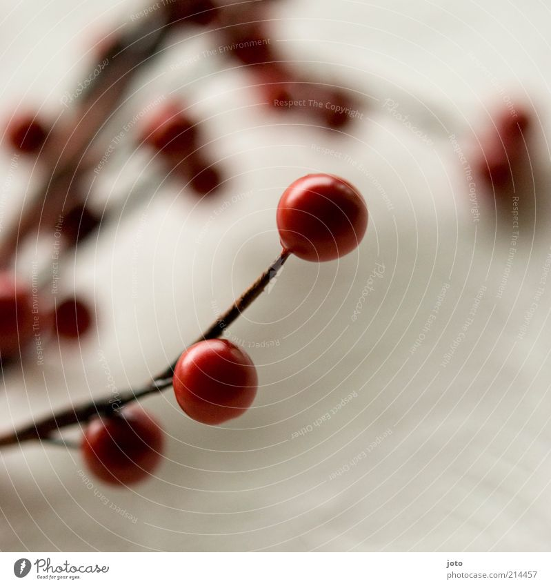 ornamental Fruit Nature Plant Bushes Calm Attachment Warmth Berries Red Decoration Table decoration Belief Pearl Sphere Round Background picture Card Autumn