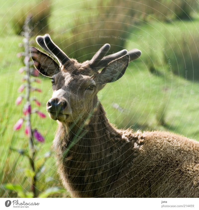 gracefulness Nature Animal Park Reindeer Deer Sadness Esthetic Elegant Free Beautiful Uniqueness Strong Loyal Secrecy Warm-heartedness Love of animals Loyalty