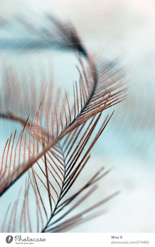 Nandu(u)-nib Animal Soft Delicate Feather Bird Background picture Fuzz Downy feather Colour photo Close-up Abstract Pattern Structures and shapes Deserted