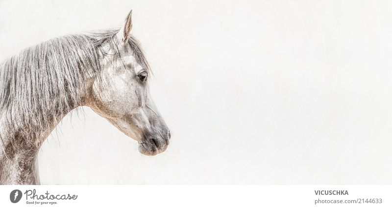 Portrait of thoroughbred Arabian horse head Lifestyle Animal Horse 1 Flag Energy Background picture Horse's head White Gray Colour photo Exterior shot Close-up