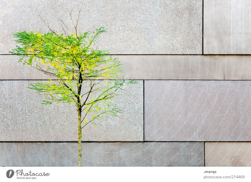 reverse Elegant Style Calm Autumn Tree Wall (barrier) Wall (building) Facade Concrete Wood Sign Illuminate Faded Esthetic Beautiful Loneliness Nature Change