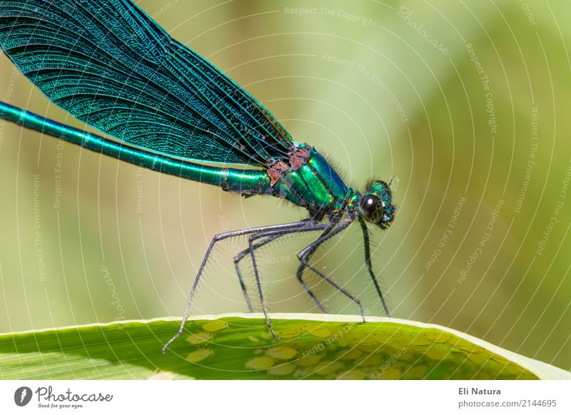 Dragonfly #3 Plant Leaf Garden Park Lakeside River bank Pond Brook Animal Wild animal Wing 1 Esthetic Exotic Gigantic Small Near Blue Yellow Green Turquoise
