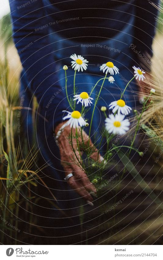 Marguerites in the field Lifestyle Style Harmonious Well-being Contentment Senses Relaxation Calm Leisure and hobbies Playing Trip Freedom Human being Feminine