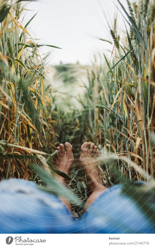 Summer feet in the field Lifestyle Harmonious Well-being Contentment Senses Relaxation Calm Leisure and hobbies Trip Freedom Human being Feet 1 Environment