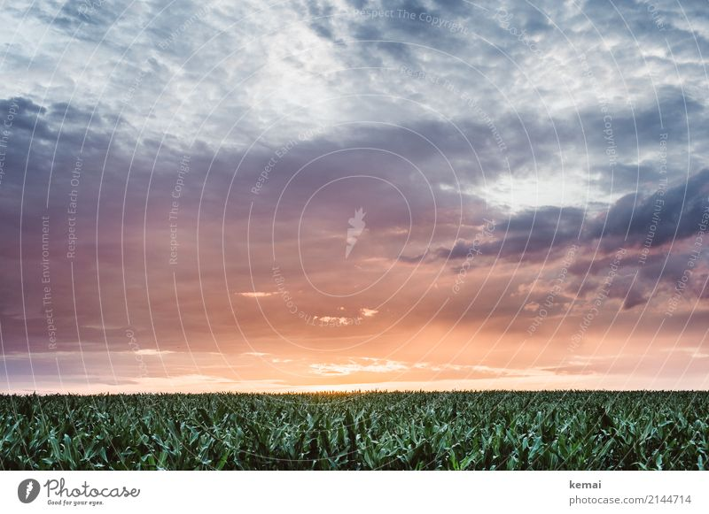 Buzzer Field Harmonious Calm Far-off places Freedom Environment Nature Landscape Sky Clouds Sunrise Sunset Summer Beautiful weather Plant Agricultural crop