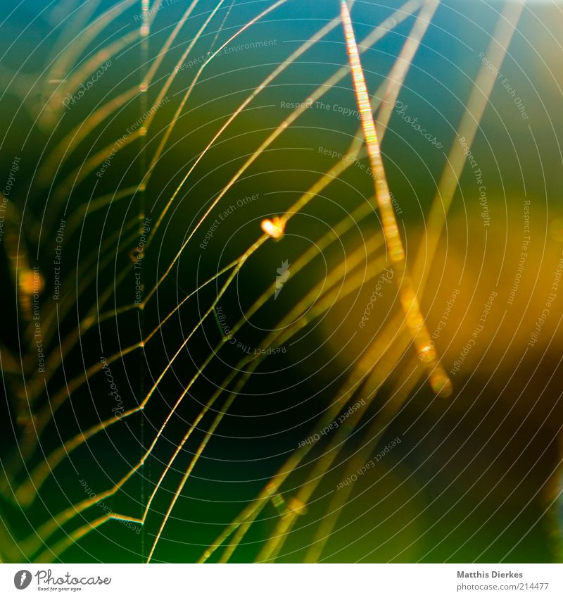 Nature Environment Esthetic Network Thin Fantastic Delicate Natural Spider Fine Spider's web Animal Thread-like