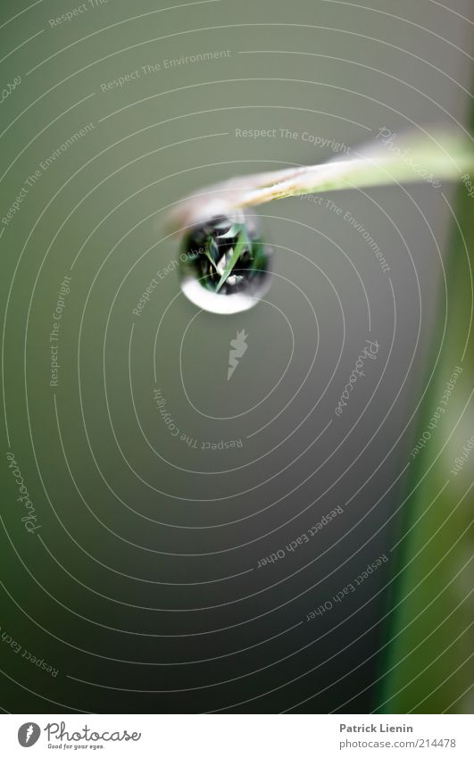 drip drop Environment Nature Plant Weather Rain Grass Leaf Foliage plant Wild plant Movement Glittering Hang Wet Moody Beautiful Drop Calm Colour photo