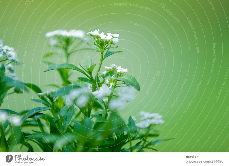 green something Nature Plant Blossom Wild plant Green White Environment Colour photo Exterior shot Close-up Deserted Day Blur Shallow depth of field