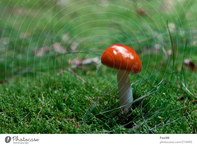 how to wear hats Leisure and hobbies Summer Growth Beautiful Small Natural Green Red White Perspective Colour photo Exterior shot Copy Space left Mushroom