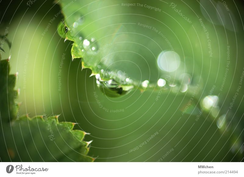 ZickeZacke Nature Water Drops of water Plant Wild plant Illuminate Fresh Green Dew Colour photo Exterior shot Macro (Extreme close-up) Copy Space right