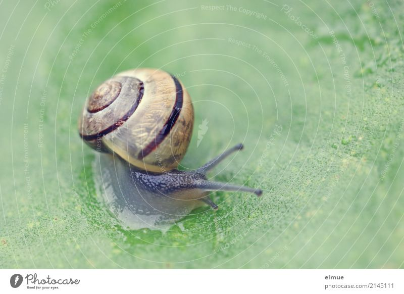 Trip to the countryside (1) Nature Animal Summer Leaf Garden Wild animal Snail Garden snail Feeler Near Slimy Contentment Optimism Willpower Brave Esthetic
