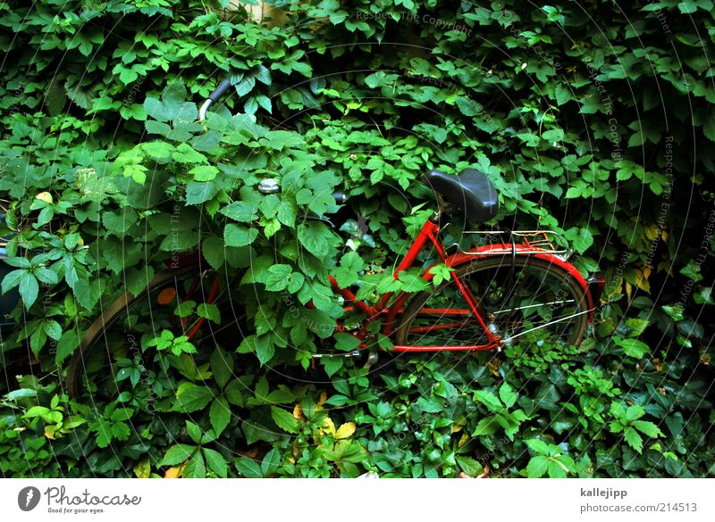Nature Green Plant Red Bicycle Environment Time Lifestyle End Uniqueness Exceptional Mobility Parking lot Ecological
