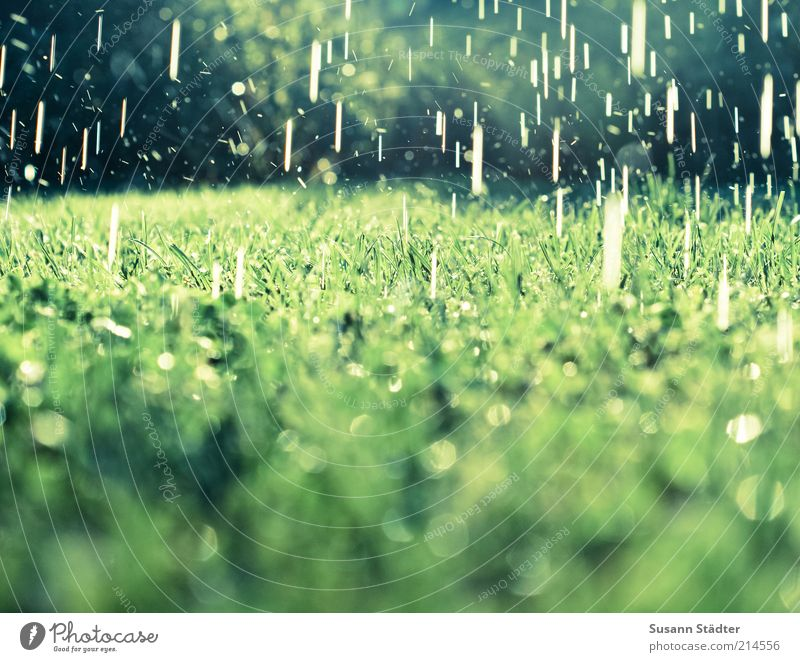 summer rain Earth Water Drops of water Summer Climate change Beautiful weather Bad weather Rain Grass Bushes Garden Meadow Exceptional Wet Natural Dripping Cast