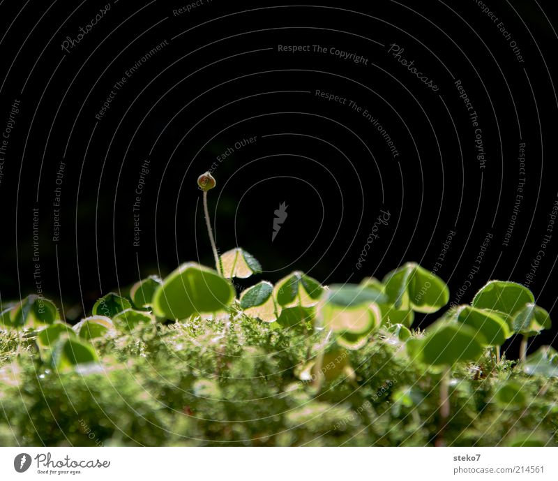burgeoning happiness Earth Foliage plant Blossoming Growth Green Happy Optimism Hope Cloverleaf Bud Moss Woodground Delicate Light Colour photo Close-up