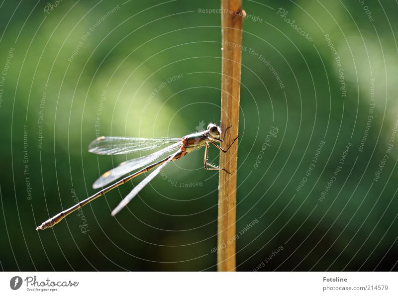 Short break Environment Nature Plant Animal Elements Air Summer Wild animal Wing 1 Sit Bright Natural Brown Green Insect Dragonfly Blade of grass Shriveled