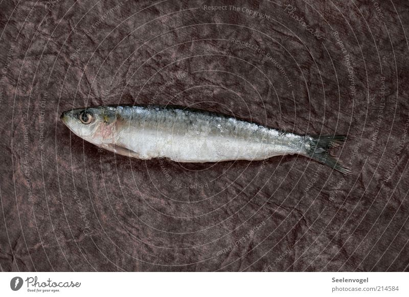 sardine Food Fish Nutrition Glittering Slimy Pink Black Silver Death Subdued colour Interior shot Deserted Shadow Bird's-eye view Animal portrait Looking away