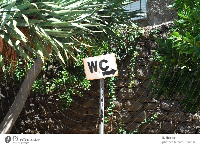 Plant Summer Wall (barrier) Signs and labeling Trip Toilet Arrow Exotic Road marking Right