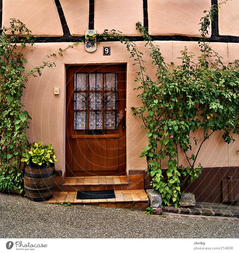 Old Green House (Residential Structure) Wall (building) Wall (barrier) Building Brown Door Pink Facade Design Arrangement Stairs Europe Esthetic Romance