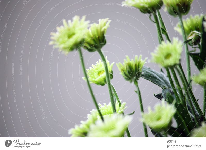 Beautiful Flower Green Plant Summer Calm Leaf Cold Style Blossom Spring Gray Moody Fresh Esthetic Simple