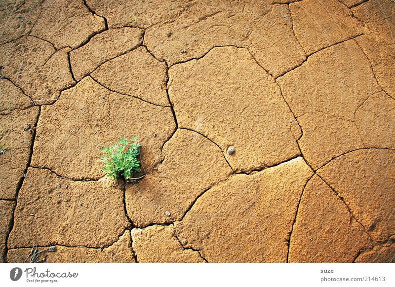 Green dot Environment Nature Landscape Plant Elements Earth Climate Climate change Drought Desert Growth Sustainability Gloomy Dry Brown Power Willpower