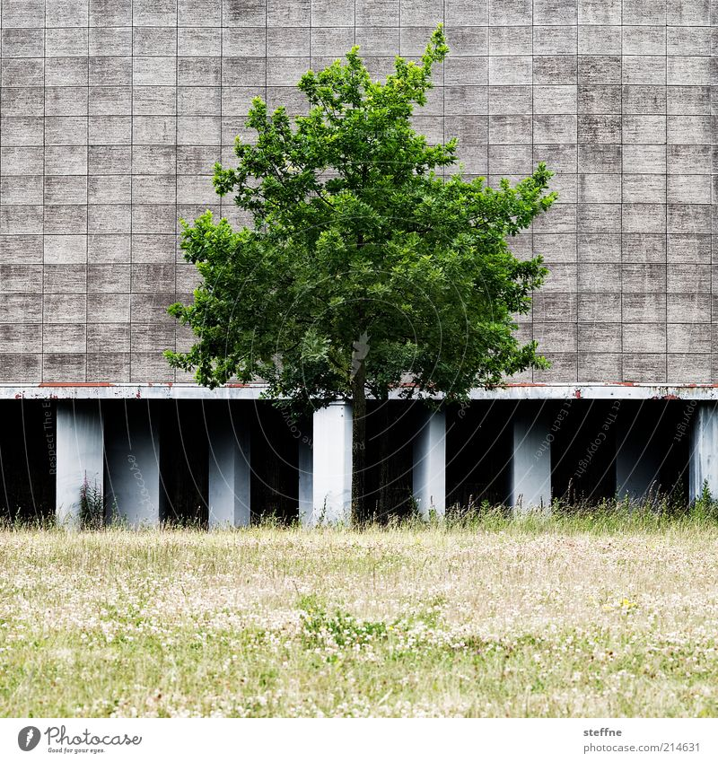 [H10.1] civilized nature Environment Nature Summer Beautiful weather Tree Grass Meadow Industrial plant Facade Natural Colour photo Exterior shot Day Contrast