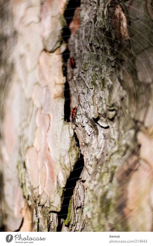 Nature Old Tree Plant Summer Animal Warmth Bright Environment Sit Insect Wild animal Tree trunk Beautiful weather Beetle Tree bark