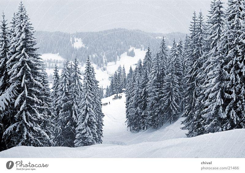 Vacation & Travel Clouds Mountain Snow Idyll Alps Fir tree Snowscape Spruce Gorgeous Ski run Winter forest Deep snow