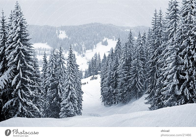 Vacation & Travel Clouds Mountain Snow Idyll Alps Fir tree Snowscape Spruce Gorgeous Ski run Winter forest Deep snow