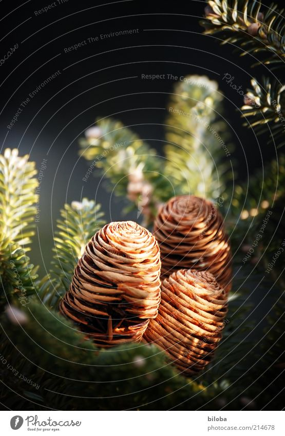 Nature Green Beautiful Tree Plant Emotions Moody Brown Gold 3 Decoration Hope Desire Fir tree Jewellery Inspiration
