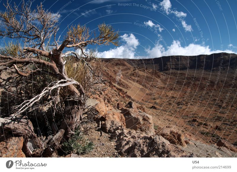 Almost like the Wild West Landscape Sky Tree Rock Volcano Tenerife Colour photo Exterior shot Day Travel photography Deserted Brown