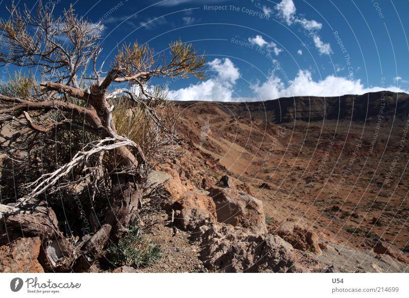 Sky Tree Landscape Brown Rock Travel photography Spain Volcano Tenerife