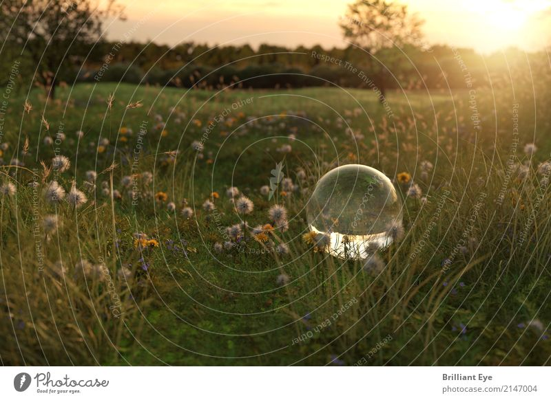 Summer idyll Summer vacation Sun Garden Nature Landscape Plant Sunrise Sunset Sunlight Flower Grass Meadow Glass Globe Natural Positive Soft Yellow