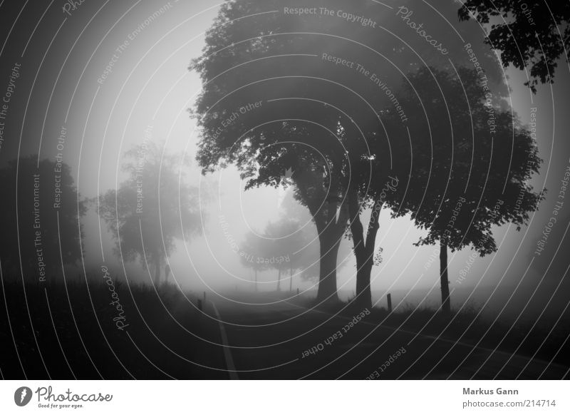 fog Nature Landscape Air Autumn Weather Bad weather Fog Meadow Forest Street Gray Black White Grief Death Germany Tree Country road Dangerous poor visibility