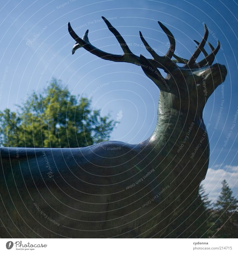 gracefulness Nature Sky Park Wild animal Esthetic Uniqueness Elegant Mysterious Life Sustainability Calm Stagnating Dream Transience Value Know Time Deer