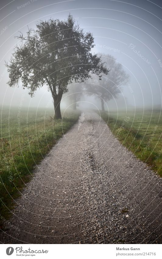 dirt road Nature Air Autumn Weather Bad weather Fog Meadow Field Moody Dream Grief Germany Footpath Grass Green Tree Lanes & trails Gravel Gravel path Gray Haze