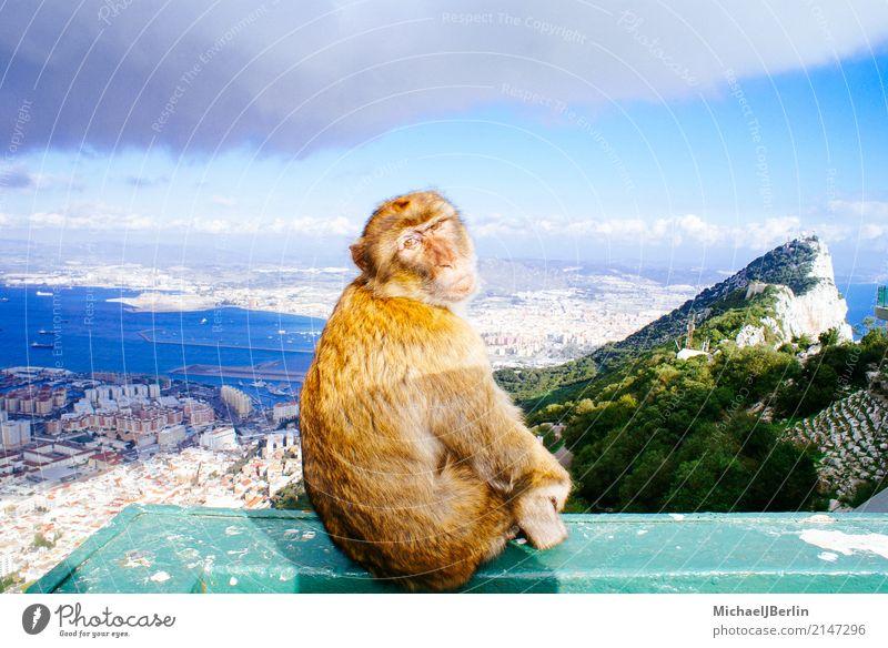 Monkey sits on rocks of Gibraltar Hill Rock Town Tourist Attraction Landmark Animal Monkeys 1 Sit Curiosity Tourism Spain Iberian Peninsula Colony Crown Colony