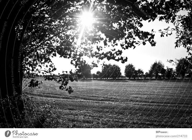 black and white Trip Summer Summer vacation Nature Tree Field Creativity Silhouette Stubble field Sunbeam Black & white photo Exterior shot Deserted Evening