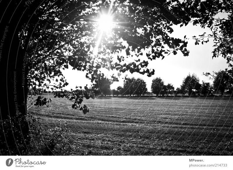 Nature Tree Sun Summer Landscape Field Trip Creativity Summer vacation Twigs and branches Stubble field