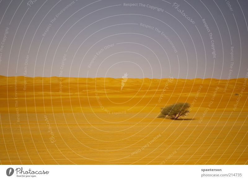desert tree Freedom Expedition Environment Landscape Sand Cloudless sky Summer Beautiful weather Warmth Tree Bushes Desert Deserted Illuminate Growth Dry Blue
