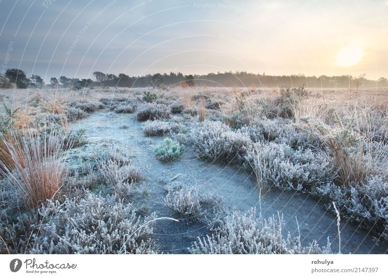 frosted path at sunrise in autumn Sun Nature Landscape Sky Horizon Autumn Fog Ice Frost Snow Flower Meadow Field Street Lanes & trails White ripe cold fall