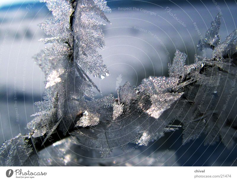ice needles Cold Winter Frozen Freeze Crystal structure Maturing time Hoar frost Snow Ice sublimation Growth