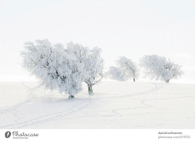White Tree Winter Vacation & Travel Snow Landscape Ice Bright Frost Tourism Climate Tracks Hill Snowscape Black Forest Plant