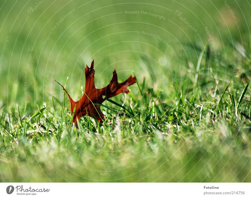 Nature Green Plant Leaf Meadow Autumn Brown Bright Environment Natural Dry Elements Shriveled Autumn leaves Fallen