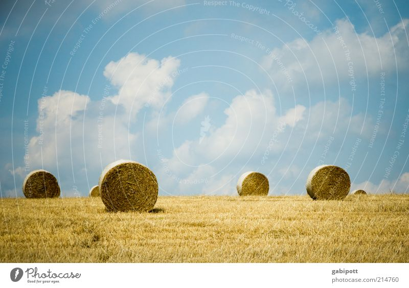 sushi Environment Nature Landscape Plant Earth Sky Clouds Summer Beautiful weather Agricultural crop Hay bale Field Positive Blue Yellow Agriculture