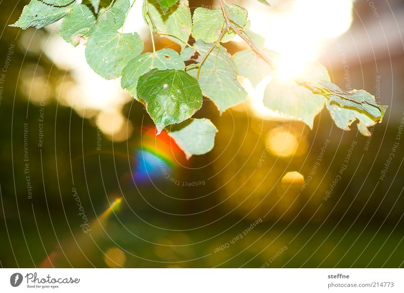 Nature Beautiful Plant Leaf Autumn Environment Beautiful weather Sunrise Lens flare Sunset Prismatic colors