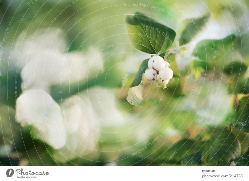 Nature Beautiful White Plant Leaf Autumn Blossom Bright Esthetic Growth Bushes Illuminate Foliage plant Autumnal Wild plant