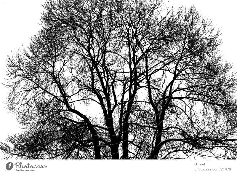 Tree Winter Branch Twig