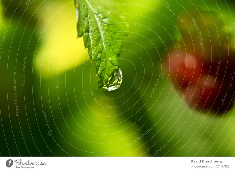 Nature Plant Green Summer Water Red Leaf Calm Yellow Life Bushes Drops of water Individual Wet Harmonious Dew